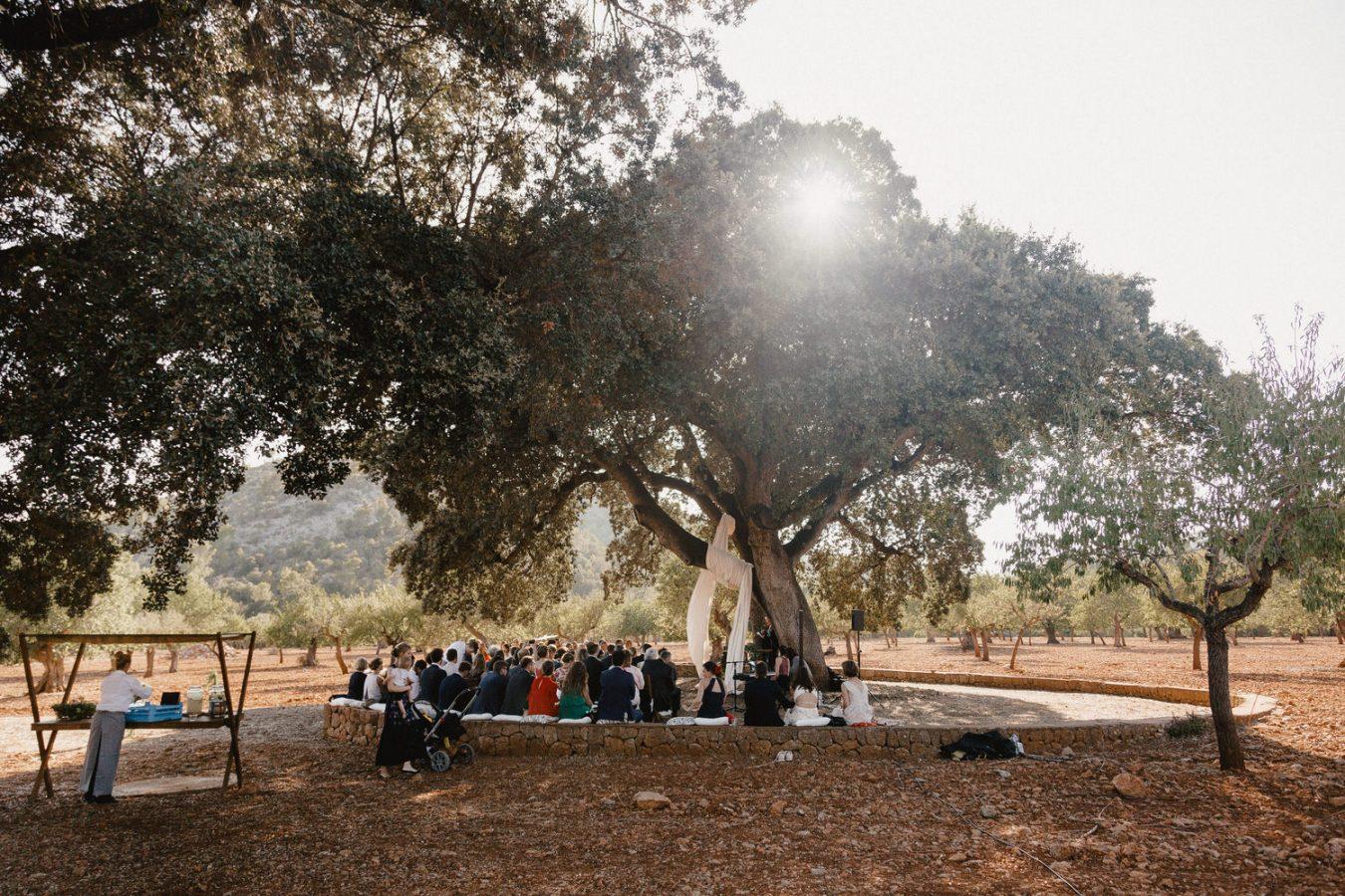 Hochzeit auf Mallorca unter einem Olivenbaum